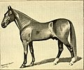 American horses and horse breeding - a complete history of the horse from the remotest period in his history to date. The horseman's encyclopedia and standard authority on horses, embracing breeds, (14781795781).jpg