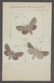 Ammoconia - Print - Iconographia Zoologica - Special Collections University of Amsterdam - UBAINV0274 057 04 0002.tif
