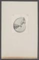 Ammonites spec. - - Print - Iconographia Zoologica - Special Collections University of Amsterdam - UBAINV0274 091 01 0003.tif