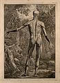 An écorché figure, back view, with left arm extended, Wellcome V0008357.jpg