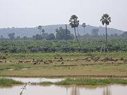 An upland scene