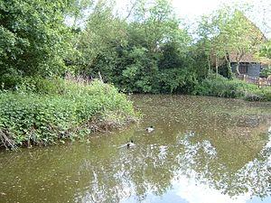 Manor Farm Country Park - The ancient duckpond at Manor Farm