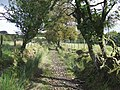Ancient Routeway, near Tregaron, Ceredigion - geograph.org.uk - 563838.jpg