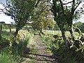 Ancient Routeway, near Tregaron, Ceredigion - geograph.org.uk - 563838.jpg