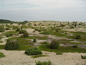 "Anholt (Denmark) - The Anholt ""desert"", more precisely a heath"