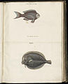 Animal drawings collected by Felix Platter, p1 - (131).jpg
