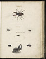 Animal drawings collected by Felix Platter, p2 - (88).jpg