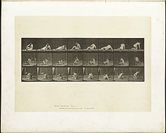 Animal locomotion. Plate 266 (Boston Public Library).jpg