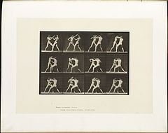 Animal locomotion. Plate 340 (Boston Public Library).jpg