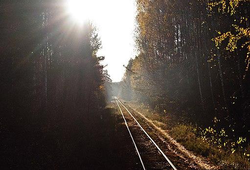 Antonivka - Zarichne railway track in forest (2)