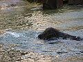 Antwerp Zoo (12211060804).jpg