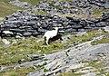 Aout 2018, Col de Tentes 03.jpg