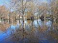 Arbres dans l'eau du marais de la Brière au début du printemps.jpg