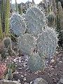 Arizona Cactus Garden 020.JPG