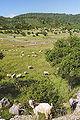 Arkadia pasture Peloponnese.jpg
