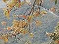 Arrival of autumn.jpg