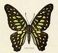 Arycles1.jpg