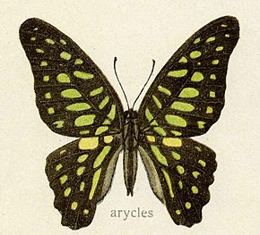 Description de l'image Arycles1.jpg.