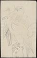 Astur palumbarius - 1700-1880 - Print - Iconographia Zoologica - Special Collections University of Amsterdam - UBA01 IZ18300021.tif