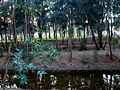 Athalassa green Natural Park rivers Nicosia Republic of Cyprus.jpg
