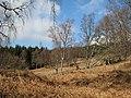Aulich Hill - geograph.org.uk - 376694.jpg