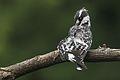 Austin Roberts Bird Sanctuary-047.jpg