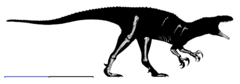 Australovenator