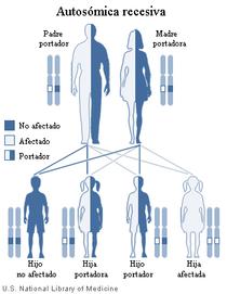 Herencia mendeliana autosómica recesiva: dos mutaciones de línea germinal (una de cada uno de los padres) para desarrollar la enfermedad; igualmente transmitida por hombres y mujeres.
