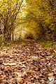 Autumn (5131876526).jpg