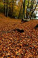 Autumn - panoramio (79).jpg