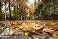 Autumn in Eram Garden 2019-12-09 01.jpg