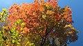 Autumn orange - panoramio (8).jpg