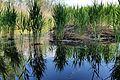 Bürmooser Moor 8.jpg