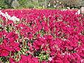 BCBG Flowers 06.JPG