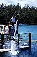 Bahamas 1988 (289) Paradise Island Paradise Lake (24126693146).jpg
