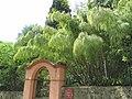 Bambou à l'entrée annexe du jardin de Val-Rahmeh.jpg