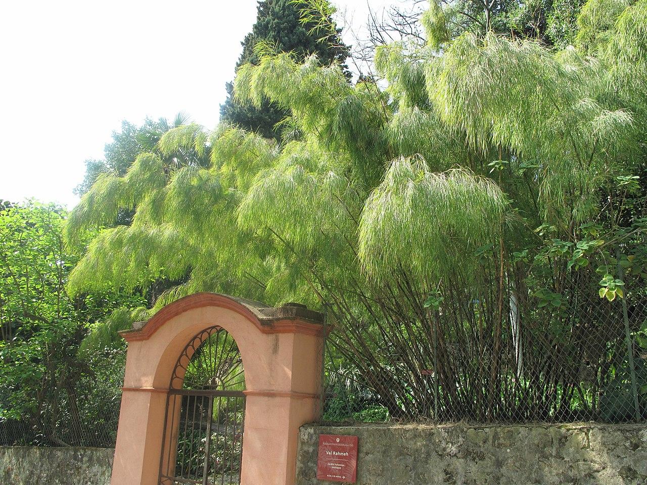 File bambou l 39 entr e annexe du jardin de val for Du jardin a l assiette mauves