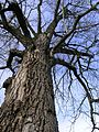 Bare Tree.jpg