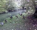 Barnwood Arboretum.JPG