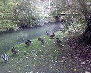 River that flows adjacent to Barnwood Arboretum