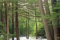 Beaver Dam Trail (4) (13229139845).jpg