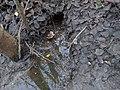 Beavers nest.jpg