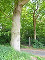 Bedburg-Hau Moyländer Allee 2-4 LSG Moyländer Wald PM18-15.jpg