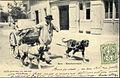 Berne-CH-attelage de chiens d'un laitier.jpg