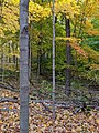 Betty Sutherland Trail - 20191026 - 05.jpg