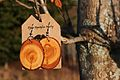 Bijoux Agrosylva Jewlery - Larix Laricina.JPG