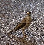 Bird 1 (31210866056).jpg