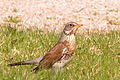 Bird in Thuringia Germany.jpg