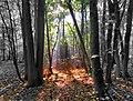 Bisham Woods (30393686480).jpg
