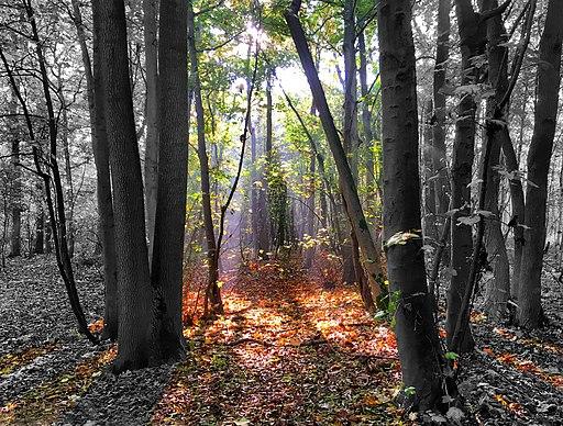Bisham Woods (30393686480)